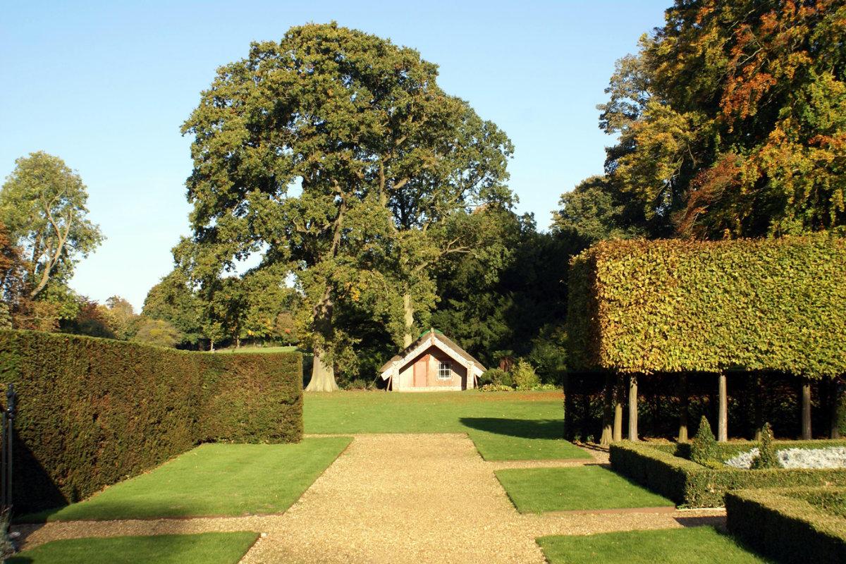 garden types of hedge plants